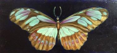 vlinder olieverf op paneel 36 x 16 cm